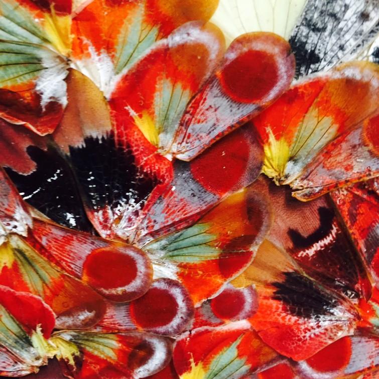 Natalia har även gjort flera bilder med fjärilar som är enormt vackra.