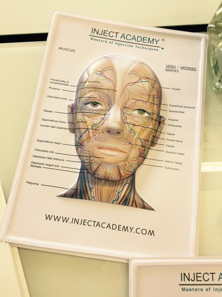 Den här fina 3D postern var min idé som alla får med sig efter kursen. Den visar alla vener, artärer och nerver i ansiktet.