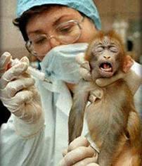 testar wella på djur